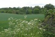 Farmland, Carrington