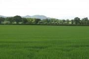 Spring crops, Carrington