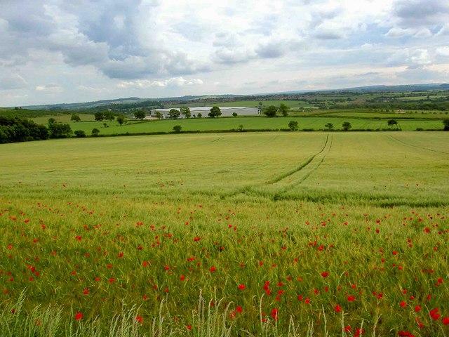 Dearne Valley farmland