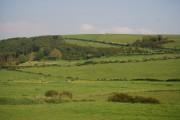 Low Walton Wood