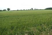 Farmland north of Carbrooke