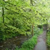 Riverside footpath, Camelford