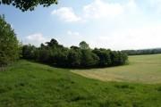 Silage Field, near Catterick