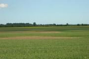 Farmland North West of Rotsea