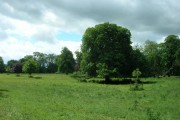 Pasture near Rotsea