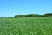 Farmland, Westfield