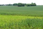Undulating farmland east of Holy Cross Church