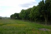 Harlestone Farmland