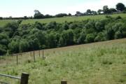 Scrub woodland on Woodlands Farm