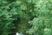 River Bourne, Hadlow (2)