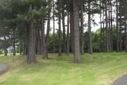 Pine wood, Linthaugh Road