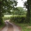 Lane to Lipe Hill (2)