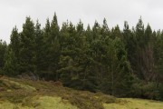 Drochaid a'Bhacain woodland near Loch Ericht