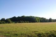 Robsacks Wood