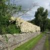 Mill Lane bridleway High Coniscliffe