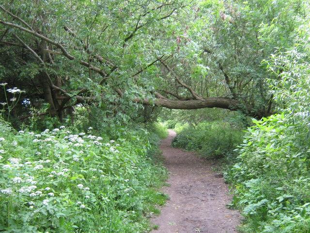 Teesdale Way footpath