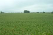 Farmland near Wetwang