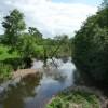 Uffculme : River Culm