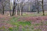 Woodland near Gwern y Baedd