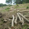 Coppicing in Codling Wood