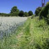 Footpath to Little Whelnetham