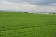 Barley field, Arkleston Road