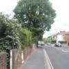 Tree in Brockhurst Road