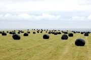 Making silage at Lowsteads Farm (12)