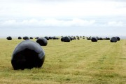 Silage at Lowsteads Farm