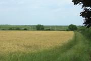 Field of barley  Stanton St. Quintin