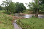 River Tone near East Nynehead (2)