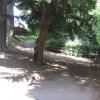 Footpaths through Brinkburn Dene