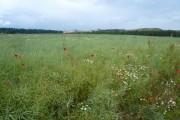 Farmland near Creswell Crags