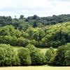 Woodland Near Polesden Lacey, Surrey