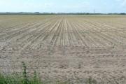 Silt farmland