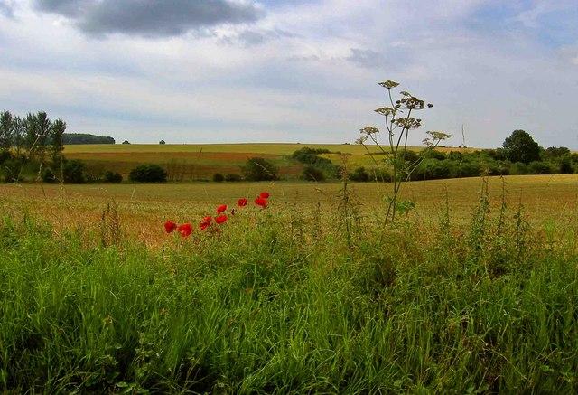 Farmland from Eastfield lane