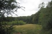 Woodland edge at Blackhouse Wood