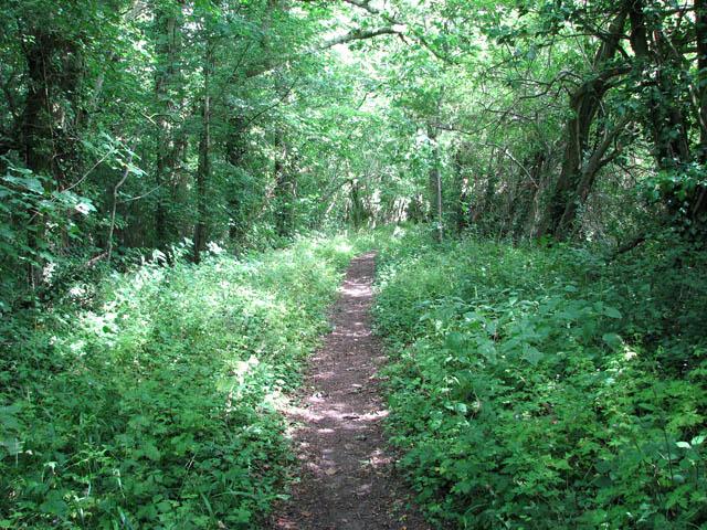 Path through Hazelmere Hole