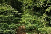 Woods above the Erme
