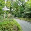 Lane in woodland