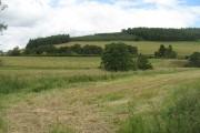 Field, Lynesmill