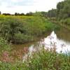 The River Tone at Hankridge