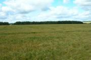 Farmland East of Shortlands Plantation