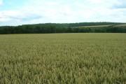Farmland near Mill Farm