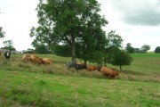 Farmland, Towthorpe Wold