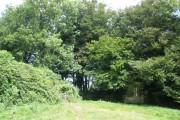 Woodland, near Mount Pleasant