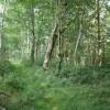 Woodland path, above Underdown Moor