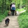 Dog Walking at Tringford Reservoir
