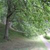 Leafy glade at   The Weir Gardens