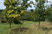Stoke St Mary: edge of Henlade Wood